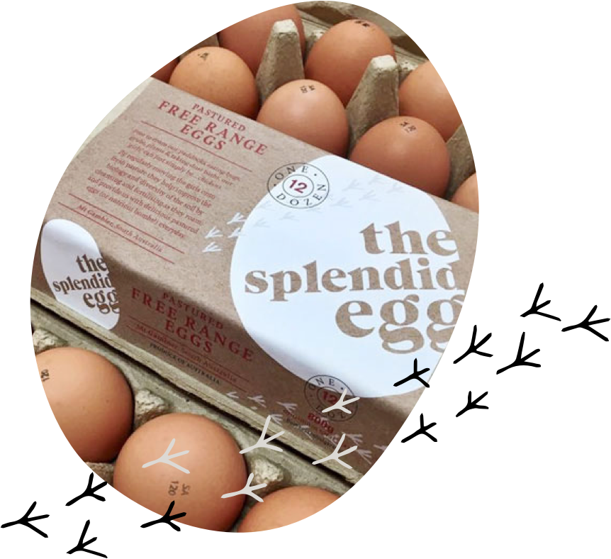 Photo of a carton of Splendid Eggs - Pastured Free Range