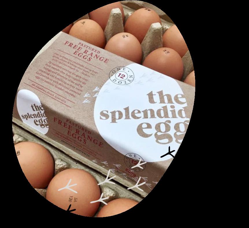 Photo of a carton of Splendid Eggs - Pastured Free Range